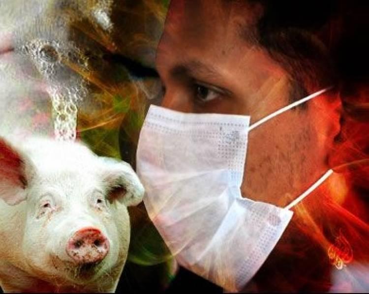 الصحة تنفي وجود أي حالات مصابة بانفلونزا الخنازير في شبوة