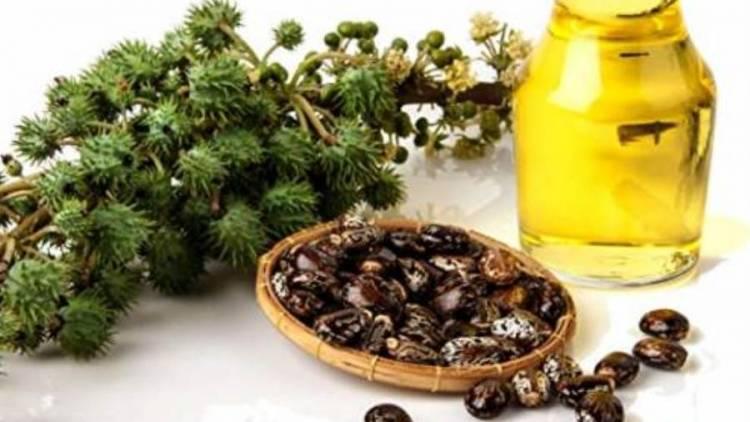 فوائد طبية لزيت الخروع